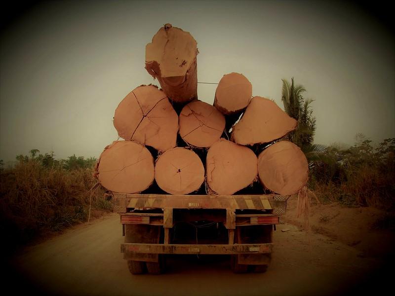 Árvores derrubadas transportadas por estradas secundárias na Amazônia. Foto: A. Duarte/Flickr/CC