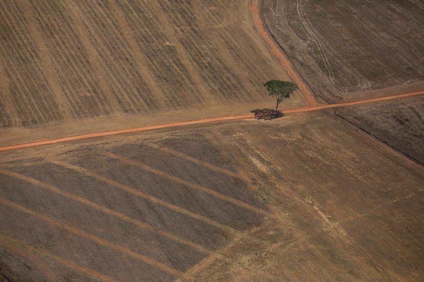 Retomada verde: COP-26 e o avanço da financeirização da natureza